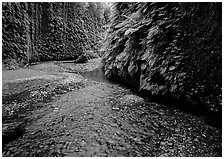 Narrow Fern Canyon with stream and walls covered with ferms,. Redwood National Park, California, USA. (black and white)