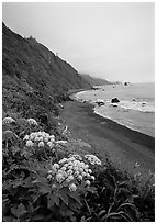 Wildflowers and beach with black sand in foggy weather, Del Norte Coast Redwoods State Park. Redwood National Park ( black and white)