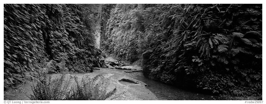 Gorge with fern-covered walls. Redwood National Park (black and white)