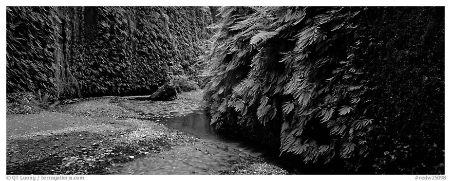 Stream in Fern Canyon. Redwood National Park (black and white)