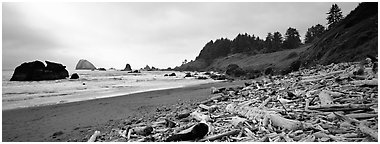 Beach with driftwood. Redwood National Park (Panoramic black and white)