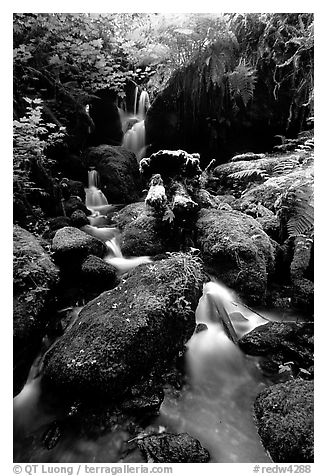Cascade and mossy rocks, Prairie Creek Redwoods State Park. Redwood National Park (black and white)