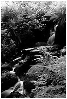 Waterfall, Prairie Creek Redwoods State Park. Redwood National Park ( black and white)