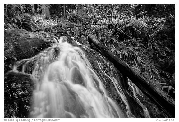 Upper cascades of Fern Falls and fallen tree, Jedediah Smith Redwoods State Park. Redwood National Park (black and white)