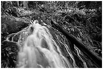 Upper cascades of Fern Falls and fallen tree, Jedediah Smith Redwoods State Park. Redwood National Park ( black and white)