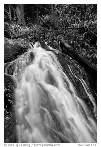 Upper cascades of Fern Falls , Jedediah Smith Redwoods State Park. Redwood National Park (black and white)