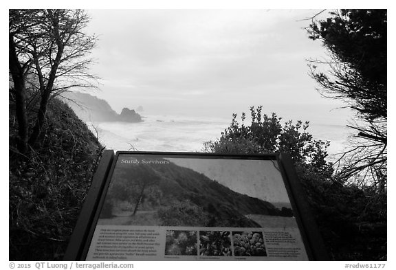 Coastline and Sturdy survivors interpretive sign. Redwood National Park (black and white)