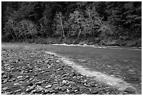 Smith River in winter, Jedediah Smith Redwoods State Park. Redwood National Park ( black and white)