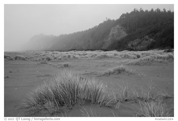 Dune grass, bluff in fog, Gold Bluffs Beach, Prairie Creek Redwoods State Park. Redwood National Park (black and white)