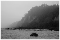 Gold Bluffs in the fog, Prairie Creek Redwoods State Park. Redwood National Park ( black and white)