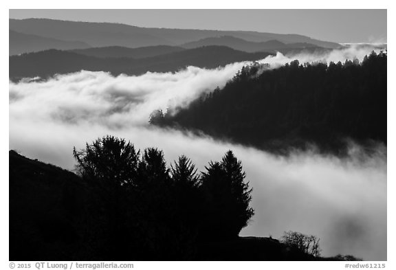 Ridges and low fog, Klamath River valley. Redwood National Park (black and white)