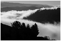 Ridges and low fog, Klamath River valley. Redwood National Park ( black and white)