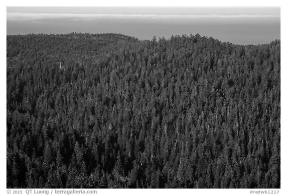 Distant view of redwood forest and ocean from Redwood Creek Overlook. Redwood National Park (black and white)