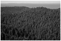 Distant view of redwood forest and ocean from Redwood Creek Overlook. Redwood National Park ( black and white)