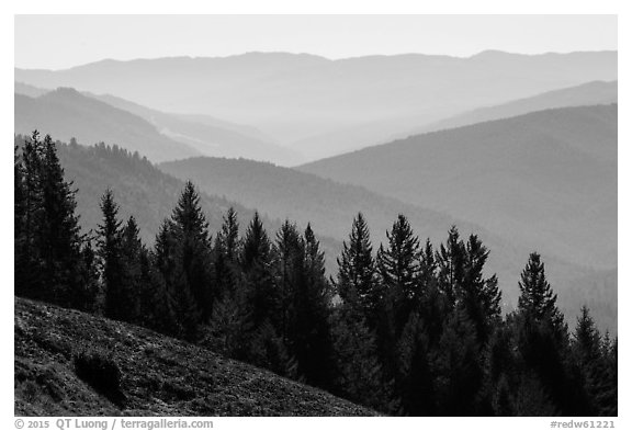 Trees and ridges from Dolason Prairie. Redwood National Park (black and white)