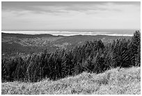 Grasses, trees, and distant Ocean from Dolason Prairie. Redwood National Park ( black and white)