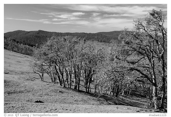 Prairie and oaks in winter near Lyons Ranch trailhead. Redwood National Park (black and white)