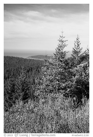 Redwood forest and Orick Hill from Redwood Creek Overlook. Redwood National Park (black and white)