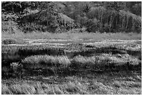 Grasses and pond. Redwood National Park ( black and white)