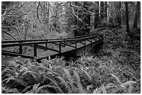 Bridge over Prairie Creek, Prairie Creek Redwoods State Park. Redwood National Park ( black and white)