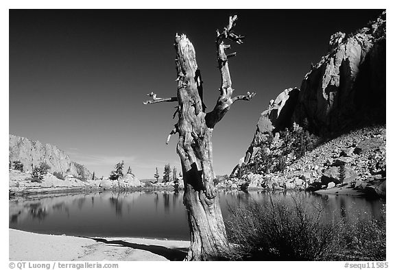 Tree skeleton, Mirror Lake, and Thor Peak, Inyo National Forest. California, USA (black and white)