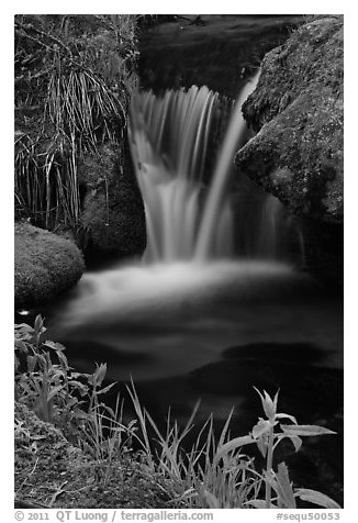 Stream cascade. Sequoia National Park (black and white)