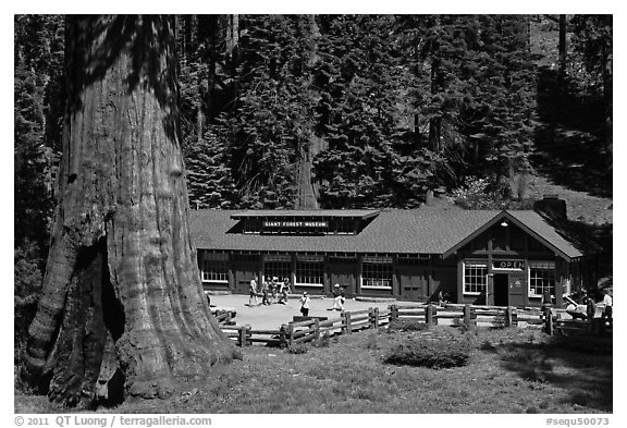 Giant Forest Museum. Sequoia National Park (black and white)