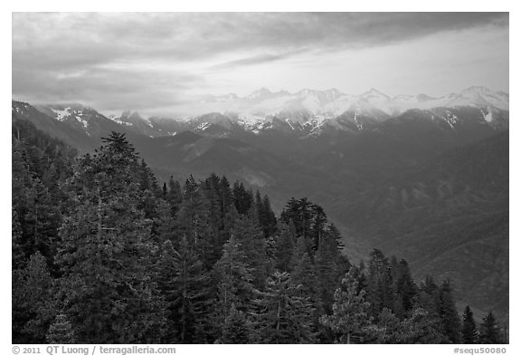Forest and Great Western Divide at sunset. Sequoia National Park (black and white)