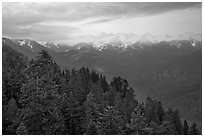 Forest and Great Western Divide at sunset. Sequoia National Park, California, USA. (black and white)