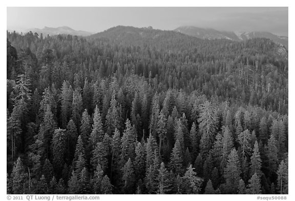 Forest and mountains at dusk. Sequoia National Park (black and white)
