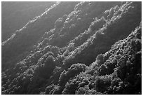 Forested canyon slopes, Marble fork of Kaweah River. Sequoia National Park ( black and white)