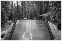 Largest tree on earth interpretive sign. Sequoia National Park ( black and white)