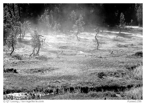 Mist raising from Tuolumne Meadows on a autumn morning. Yosemite National Park (black and white)