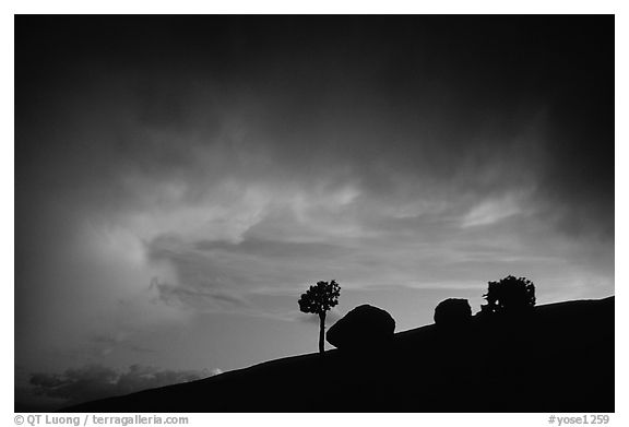 Pine and glacial erratics, dusk, Olmsted point. Yosemite National Park (black and white)