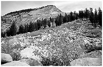 Peak near Sunrise Lakes, autumn. Yosemite National Park ( black and white)