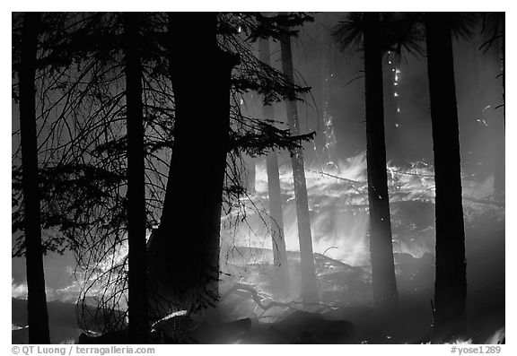 Prescribed fire. Yosemite National Park (black and white)