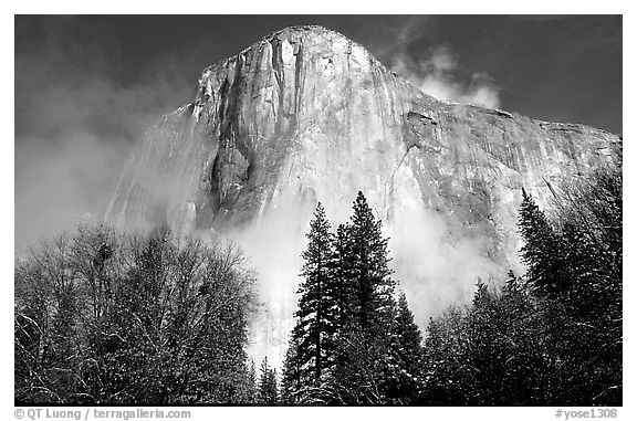 El Capitan, trees and fog, morning. Yosemite National Park (black and white)