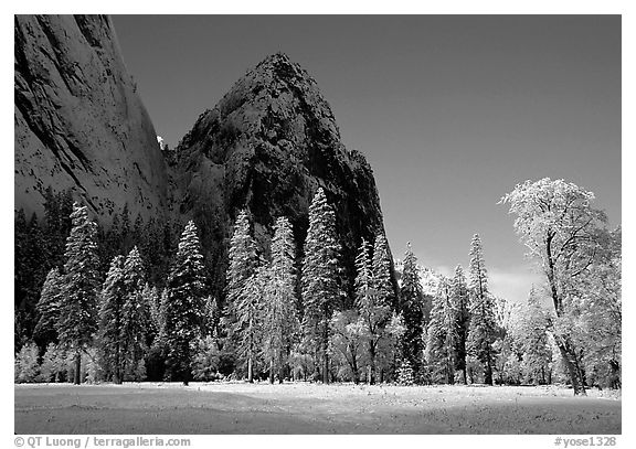 Trees in El Capitan Meadows and Cathedral rocks with fresh snow, early morning. Yosemite National Park (black and white)