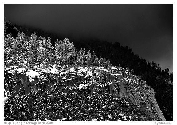 Pine trees on Valley rim, winter. Yosemite National Park (black and white)