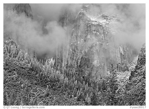Trees, cliffs and mist. Yosemite National Park (black and white)