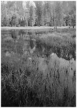 Seasonal pond in spring meadow. Yosemite National Park, California, USA. (black and white)