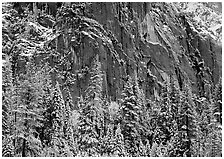 Dark rock wall and snowy trees. Yosemite National Park, California, USA. (black and white)