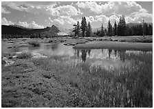 Spring pond in Tuolumne Meadows and Lambert Dome. Yosemite National Park, California, USA. (black and white)