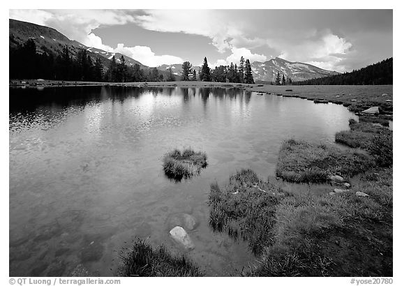 Alpine tarn near Tioga Pass. Yosemite National Park (black and white)
