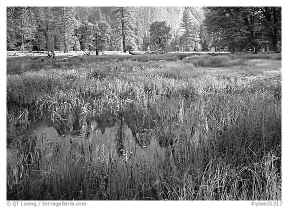 Flooded Meadow below Cathedral Rock in spring. Yosemite National Park (black and white)