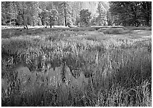 Flooded Meadow below Cathedral Rock in spring. Yosemite National Park ( black and white)