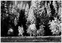 Meadow near Happy isles in spring. Yosemite National Park ( black and white)