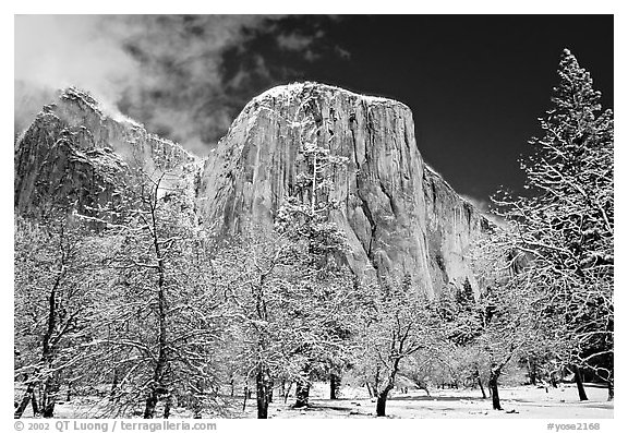 Snow-covered trees and West face of El Capitan. Yosemite National Park (black and white)