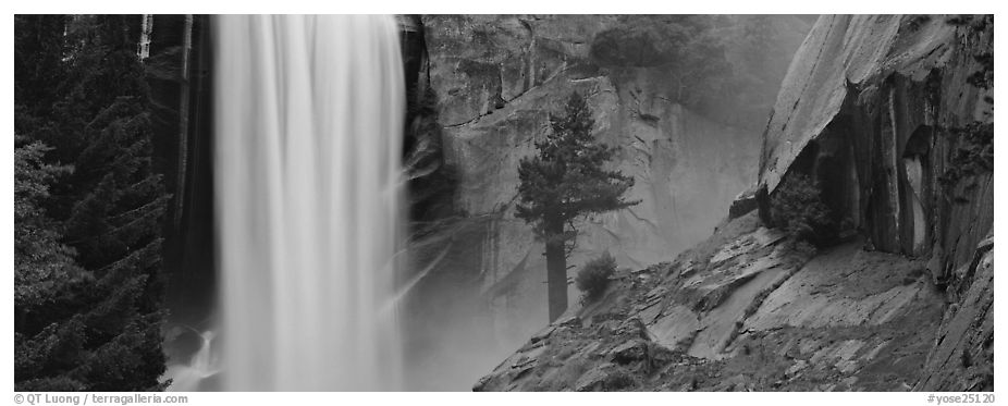 Vernal Fall and tree. Yosemite National Park (black and white)