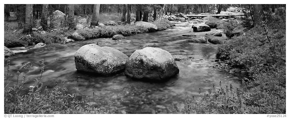 Two boulders in stream with lupine. Yosemite National Park (black and white)
